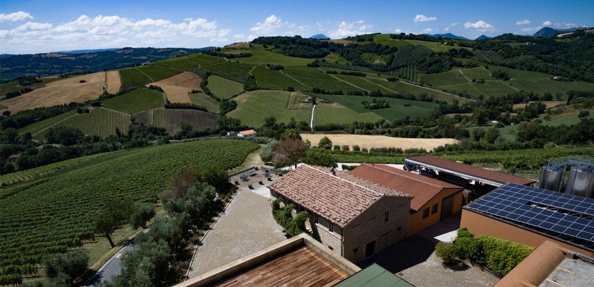 sartarelli-verdicchio-jesi-vinosano