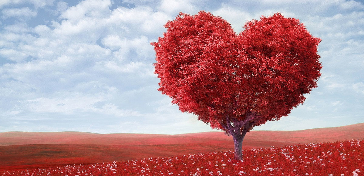 cuore-albero-vinosano