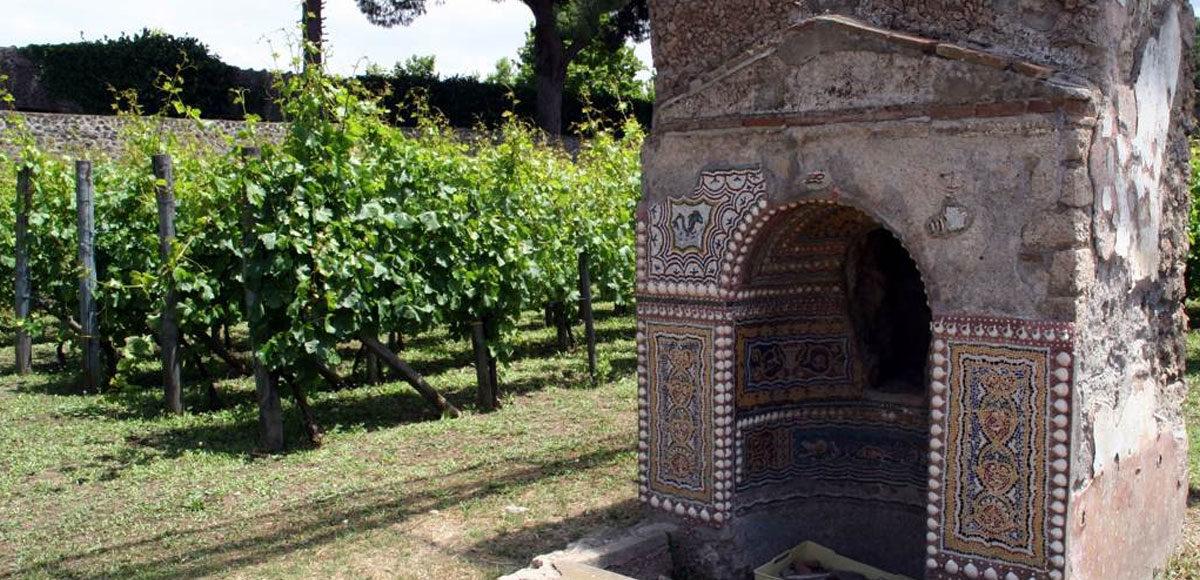 mastroberardino-pompei-vitigno