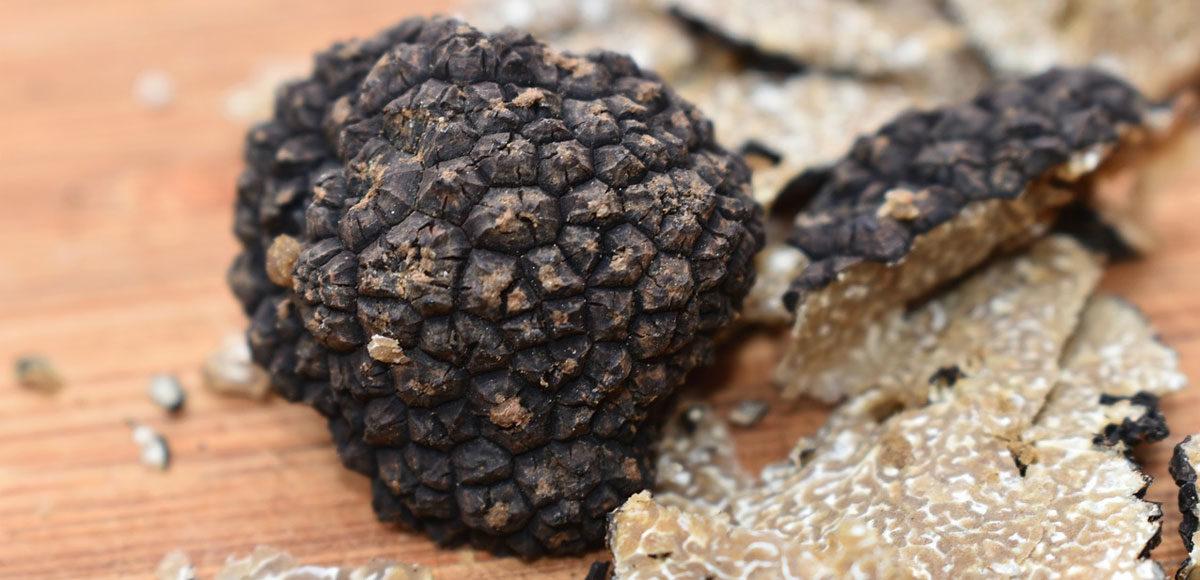 tartufo-alba-truffle-vinosano-borsino