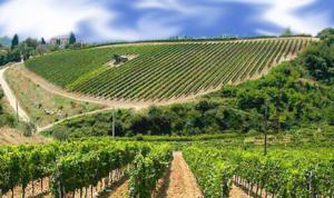 territorio maria giovanna basile risorsa vinosano