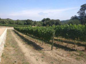 vigneto-siddura-vinosano-degustazione-vino