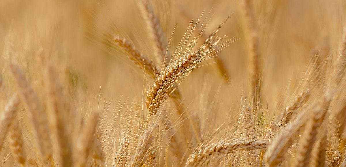 agricoltura-fondi-europei-a-rischio