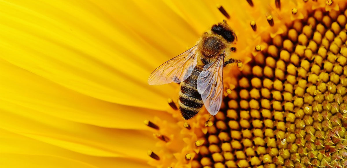 crollata-produzione-miele-api