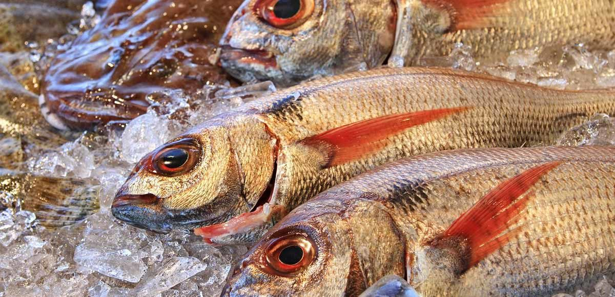 consumo-di-pesce-sostenibile
