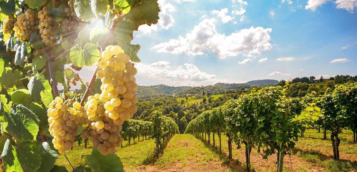 toscana-discover-the-differences