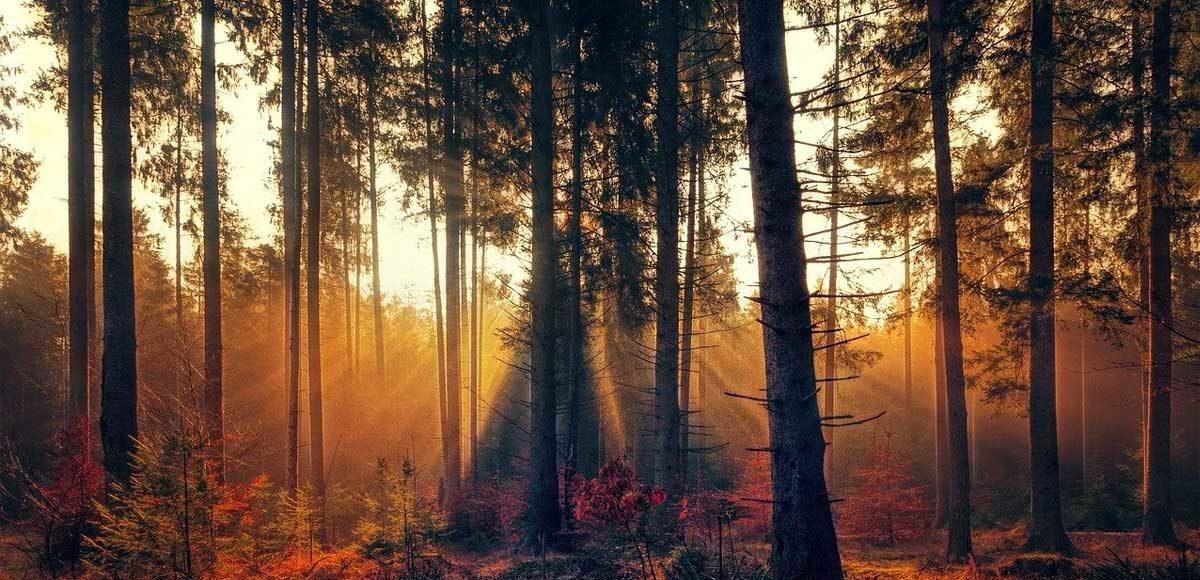 foreste-incontaminate-difesa-naturale-virus-coronavirus-covid