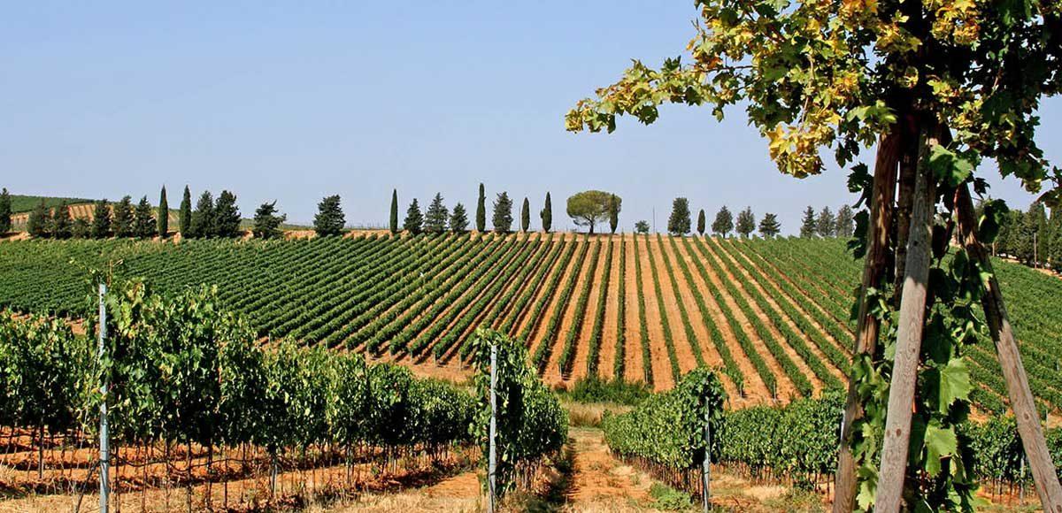 moris-farms-il-falco-della-maremma