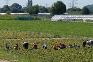 agricoltura-braccianti-regolarizzare-bellanova