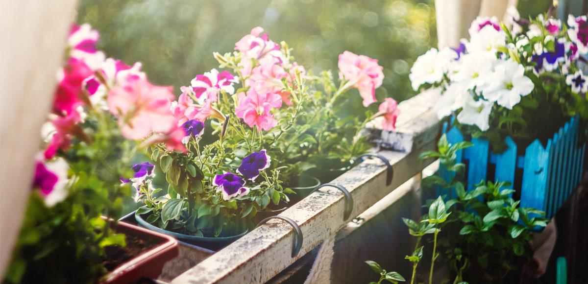 balconi-fioriti-campagna-coldiretti