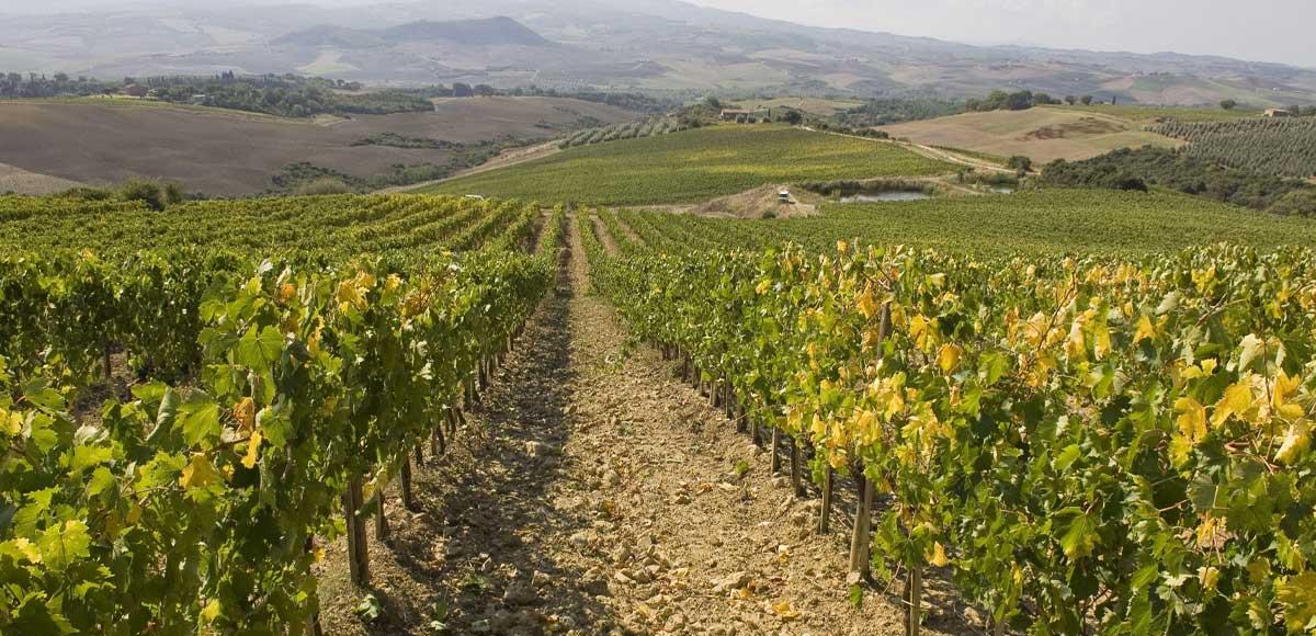 degustazione-di-brunello-di-montalcino-vino