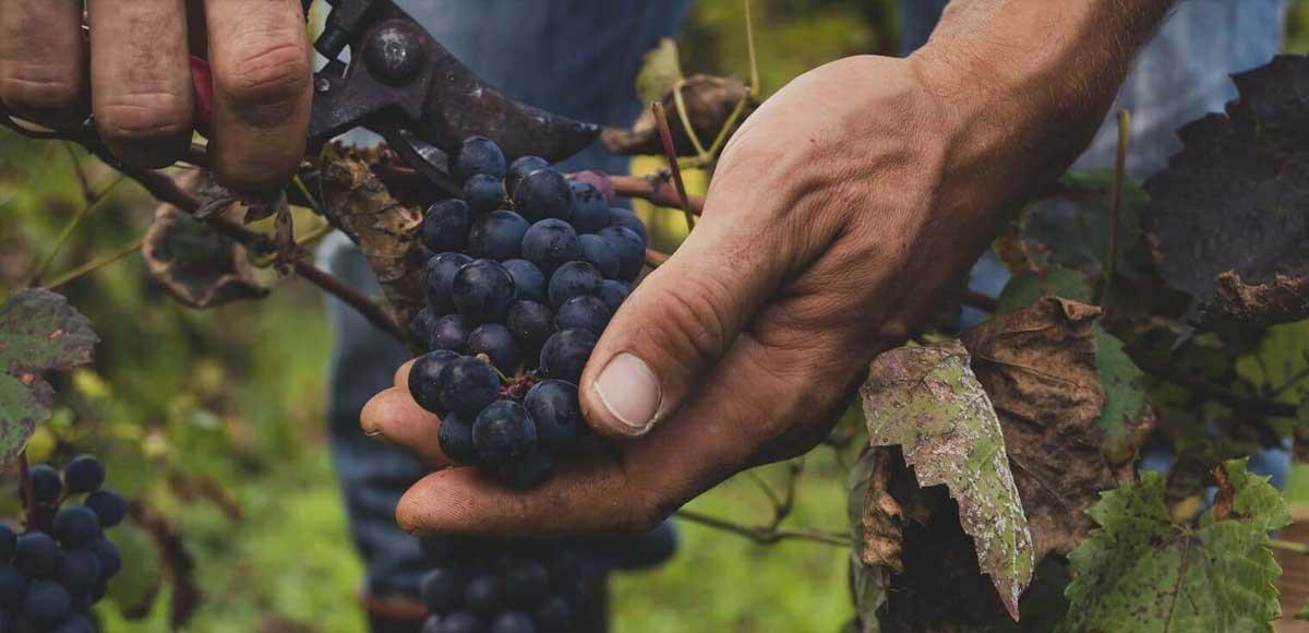 i-vignaioli-naturali-non-si-fermano-vino