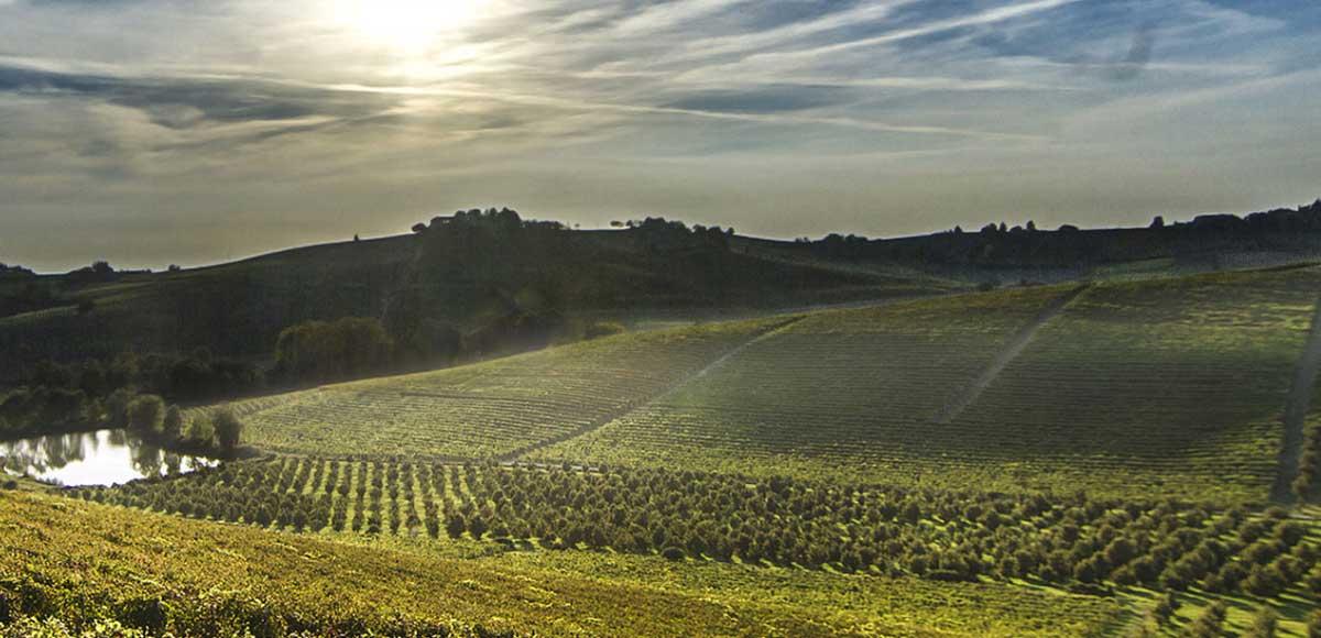 montalbera-e-il-ruche-degustazione-vino
