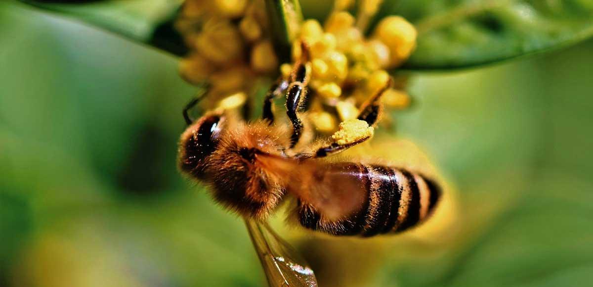 apicoltura-mercato-da-tutelare